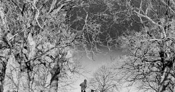 Ten sam spacer w parku. Ta sama ścieżka, drzewa, których kształt znamy na pamięć. Kroki, światło i ledwie słyszalny zgiełk ulicy. Wszystko znajome. Jak zawsze. W takiej monotonii kryją się największe fotograficzne wyzwania.