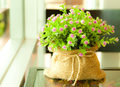 Jak dbać o rośliny w okresie grzewczym?