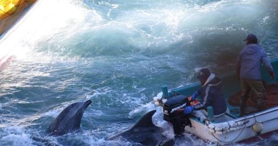 Japońscy rybacy z niewielkiego portu Taiji, na południowym wschodzie kraju, zabili około 30 delfinów - poinformowali obrońcy praw zwierząt. Zwierzęta są zabijane dla ich mięsa.