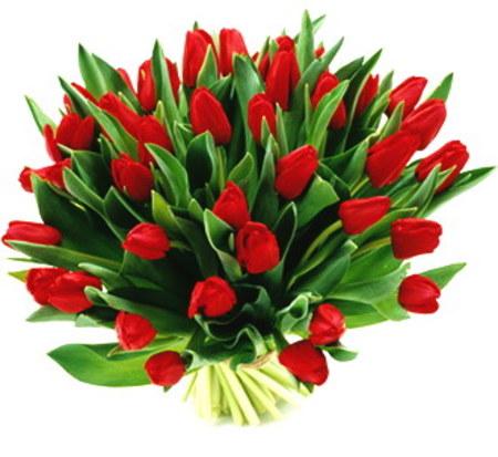 Czy Wypada Dać Facetowi Kwiaty Forum Mobilna Interiapl