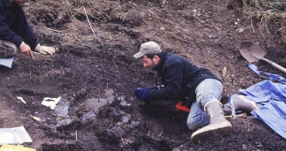 """Na Alasce odkryto czaszkę niewielkiego kuzyna strasznego tyranozaura. Dzięki znalezisku można lepiej poznać różnorodność biologiczną tej strefy klimatycznej pod koniec okresu kredowego - informują naukowcy na łamach pisma """"Public Library of Science ONE""""."""
