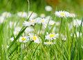 Kwiaty i zioła z pól i łąk dla zdrowia i urody