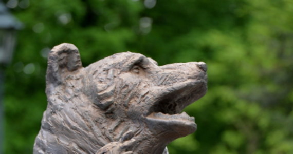 Pomnik kaprala niedźwiedzia Wojtka, jednego z symboli armii generała Władysława Andersa, stanął w krakowskim Parku Jordana w Krakowie. Uroczyste odsłonięcie monumentu odbyło się w 70. rocznicę zdobycia przez żołnierzy 2 Korpusu Polskiego klasztoru na Monte Cassino.