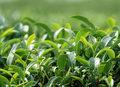 Herbaciany tonik na dekolt i ramiona