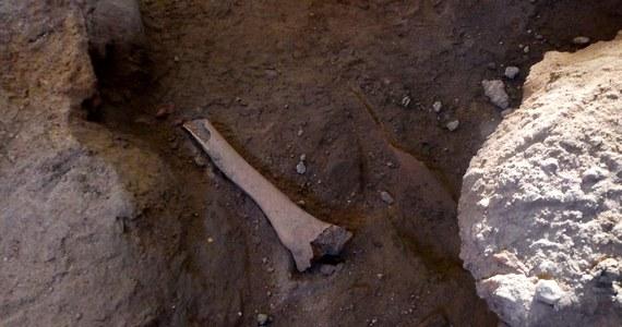 """Szczątki 15 powstańców listopadowych odkryto podczas budowy boiska w miejscowości Liw - informuje """"Nasz Dziennik"""". Archeolodzy ustalili, że to szkielety uczestników zrywu z 1830 r. dzięki odnalezionym przy nich przedmiotach."""