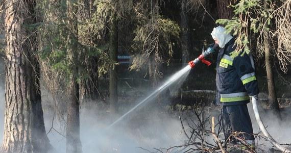 Drastycznie rośnie liczba pożarów spowodowanych upałami. Tylko wczoraj strażacy gasili ponad 620 pożarów - w tym 75 pożarów lasów i upraw. To trzy razy więcej niż dzień wcześniej.