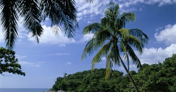 Pięcioletni Francuz zmarł na południu Tajlandii, gdy podczas kąpieli w morzu poparzyła go kubomeduza - poinformowała lokalna policja. To jedno z najbardziej jadowitych stworzeń na Ziemi.