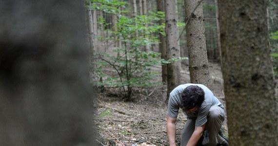 Szczęśliwy finał poszukiwań 72-latka z Kluczborka na Opolszczyźnie. Mężczyzna noc spędził w lesie, bo zgubił drogę powrotną.