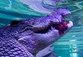 Dziewięciometrowy krokodyl?