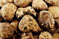 Grzyby shiitake lekiem na wirusa HPV