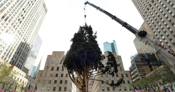 Ogromna, ważąca 13 ton choinka stanęła przed Rockerfeller Center w Nowym Jorku. Pracownicy przygotowują ją do oficjalnego rozpoczęcia okresu świątecznego 3 grudnia.