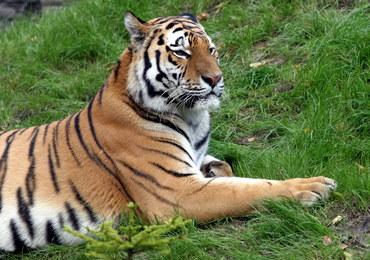 Kolejny tygrys Putina wyemigrował z Rosji