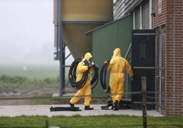 Holandia: Ptasia grypa na kolejnej fermie