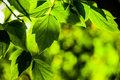 Coraz bliżej stworzenia sztucznej fotosyntezy