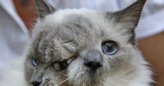 Zdechł Kot O Dwóch Twarzach Faktyinteriapl