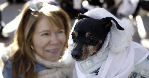 Psy, koty oraz inne zwierzęta domowe znajdą schronienie przed fajerwerkami w porcie lotniczym Arlanda pod Sztokholmem. Spokojnego sylwestra dla czworonogów i ich właścicieli organizują dwa przylotniskowe hotele.