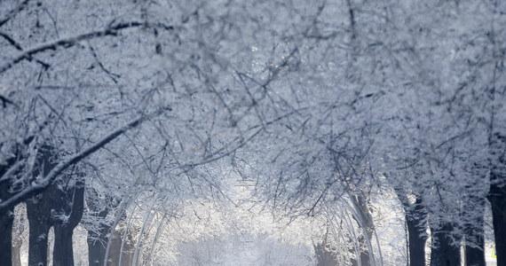 W najbliższych dniach zima łagodnie przypomni nam o sobie - będzie sypał śnieg i pojawią się niewielkie przymrozki. Na termometrach w ciągu dnia zobaczymy od minus 2 do plus 2 stopni Celsjusza.