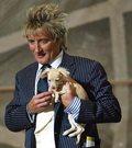 Rod Stewart: Król przeróbek