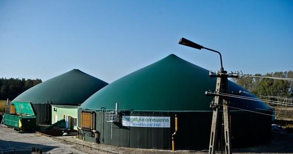 Energię elektryczną z obornika, gnojówki, kiszonki kukurydzy oraz wysłodków buraczanych produkuje biogazownia uruchomiona w gospodarstwie rolnym Zakładu Doświadczalnego Instytutu Zootechniki w Odrzechowej koło podkarpackiego Sanoka. Inwestycja o mocy 500 kW była współfinansowana ze środków Unii Europejskiej oraz Wojewódzkiego Funduszu Ochrony Środowiska i Gospodarki Wodnej w Rzeszowie.