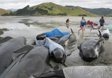 Morze wyrzuciło na brzeg ponad 200 waleni