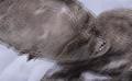 Tajemnicze mumie na szczycie góry