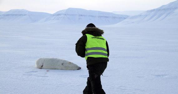 Niedźwiedź polarny zaatakował mężczyznę biwakującego w Svalbard, arktycznym regionie Norwegii. W obozowisku było w tym czasie sześć osób. Turyści przyjechali z Czech, by zobaczyć zaćmienie Słońca w pełnej krasie.