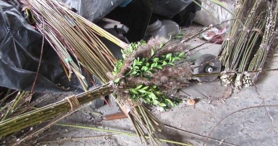 Ponad 100 palm wielkanocnych przygotowywanych jest na konkurs w małopolskiej Lipnicy Murowanej. Ocenianie będzie zdobienie, a także wysokość. Do pobicia jest rekord wynoszący 36 metrów i 4 centymetry.