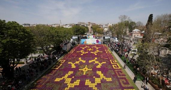 W Stambule na historycznym placu Sultanahmet rozkwitł wielki dywan z tulipanów - kwietnik ułożony z ponad pół miliona żywych kwiatów, tworzących misterny wzór. Według władz miejskich ten tulipanowy dywan jest największy na świecie.
