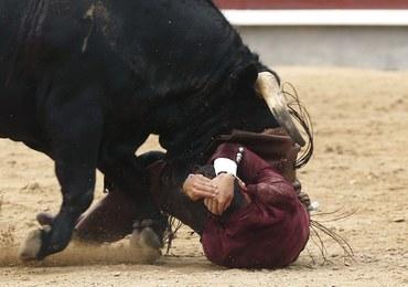 Krwawa corrida. Byk rozerwał jądro torreadorowi