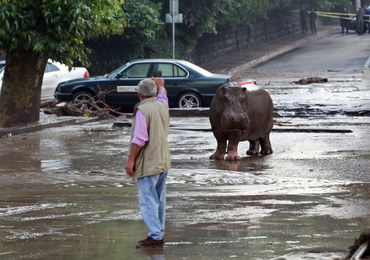Gruzja: Rośnie bilans ofiar powodzi. Z zoo uciekły groźne zwierzęta