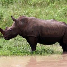 Krwawe safari - płać i zabijaj