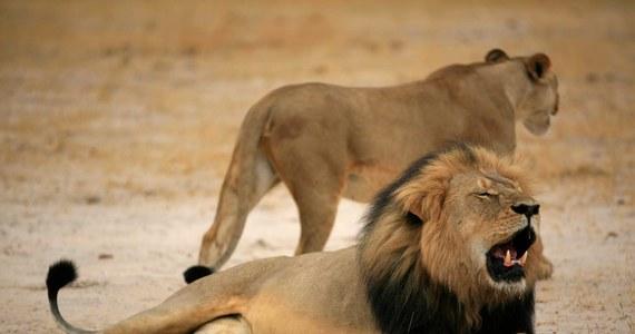 Według nieoficjalnych informacji, zagraniczny myśliwy zastrzelił w pobliżu parku narodowego Hwange w Zimbabwe  lwa o imieniu Jericho. To brat zabitego niedawno Cecila, uchodzącego za symbol tego kraju.