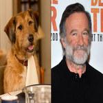 Robin Williams: Życie po życiu