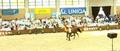 Pepita najdroższym koniem w historii polskiej hodowli
