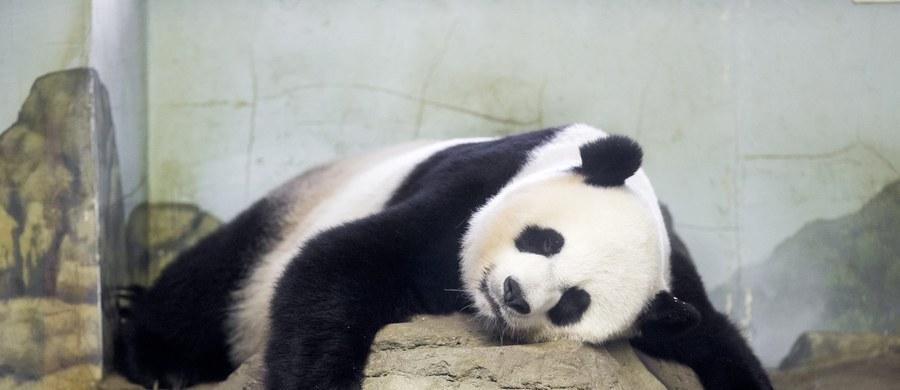 Waszyngtońskie zoo poinformowało na Twitterze, że mieszkająca tam 17-letnia samica pandy wielkiej Mei Xiang urodziła wczoraj po południu dwa młode. Według pracowników ogrodu oba maluchy wyglądają na zdrowe. Narodziny młodych tego zagrożonego gatunku w niewoli są bardzo rzadkie.