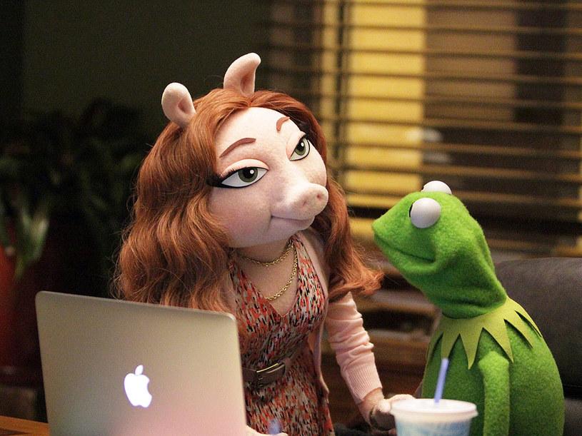 Choć żaba Kermit zaprzecza plotkom jakoby z Denise łączyło go coś więcej niż przyjaźń, te argumenty nie przekonują internautek. Z całego świata płyną głosy sprzeciwu i hejtu wobec nowej wybranki serca pluszowego celebryty.