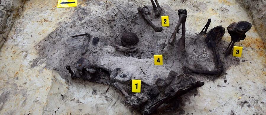 Szczątki ofiar komunistycznego terroru, odnaleziono w lasach na terenie gminy Lelis, niedaleko Ostrołęki (Mazowieckie). Informację o egzekucji przeprowadzonej tam w 1946 roku przekazał przypadkowy świadek tego zdarzenia, pragnący zachować anonimowość.