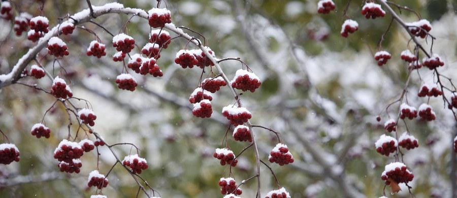 Pierwsza śnieżyca zaskoczyła mieszkańców Moskwy. Jeszcze przed dwoma tygodniami jesienne temperatury dochodziły w stolicy Rosji do 20 stopni Celsjusza. W piątek na miasto wyjechały pługi śnieżne.