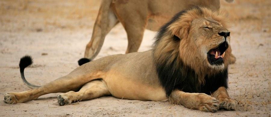 Władze Zimbabwe nie oskarżą amerykańskiego dentysty za zabicie lwa – symbolu tego kraju. Walter Palmer w lipcu zastrzelił zwierzę o imieniu Cecil, jedną z największych atrakcji tego afrykańskiego kraju. Posiadane przez niego zezwolenia nie pozwalają na to, by usłyszał zarzuty.