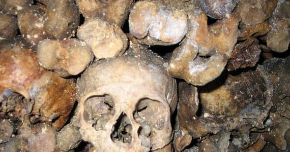 Darmowy nocleg dla dwóch osób w paryskich katakumbach w Halloween – wśród milionów czaszek! To nietypowa i kontrowersyjna oferta firmy, która wynajęła na halloweenową noc słynną podziemną nekropolię za 350 tysięcy euro od władz Paryża.