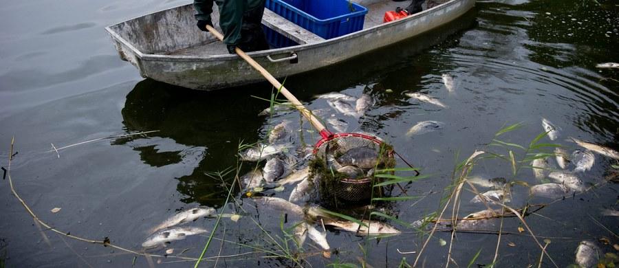 Po dwóch tygodniach Inspekcja Ochrony Środowiska namierzyła sprawcę katastrofy ekologicznej w Poznaniu. Nieznana substancja wpuszczona do Warty zabiła trzy tony ryb.