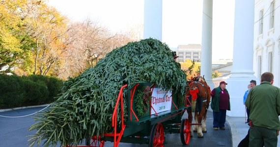W USA oficjalnie sezon bożonarodzeniowy rozpoczęty. Do Białego Domu przywieziono choinkę, która ozdobi Niebieski Pokój.