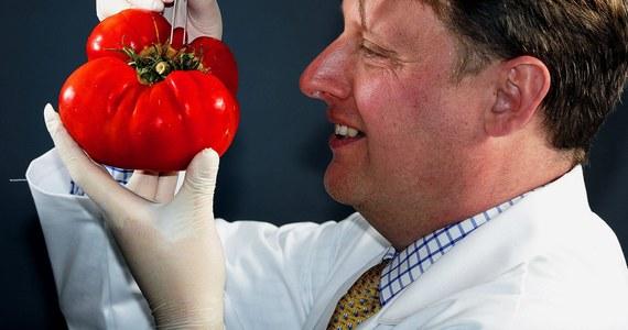 """Narzekania na nowe metody uprawy pomidorów, że nie zapewniają nam warzyw o bogatym aromacie, nie muszą być do końca uzasadnione. Wszystko wskazuje na to, że także nasze codzienne praktyki kuchenne sprawiają, że pomidory nie pachną i nie smakują """"jak dawniej"""". Przekonują o tym na łamach czasopisma """"HortScience"""" naukowcy z U.S. Horticultural Research Laboratory. Wyniki ich badań wskazują, że pomidorom szkodzi zarówno oparzanie gorącą wodą, jak i przechowywanie w lodówce. To ostatenie zresztą bardziej."""