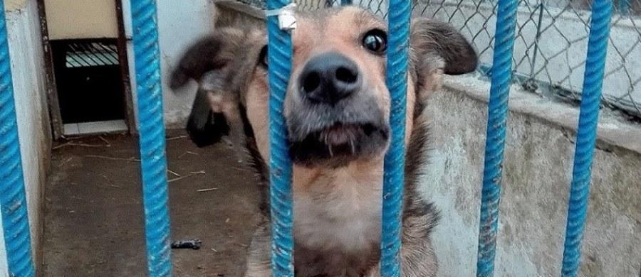 Już siedem psów ze schroniska w kieleckich Dyminach znalazło swoich wirtualnych opiekunów. Miłośnicy czworonogów, którzy nie mają warunków, by przygarnąć je do swojego domu, kupują pupilom karmę lub przekazują pieniądze, by schronisko mogło zapewnić im właściwą opiekę.
