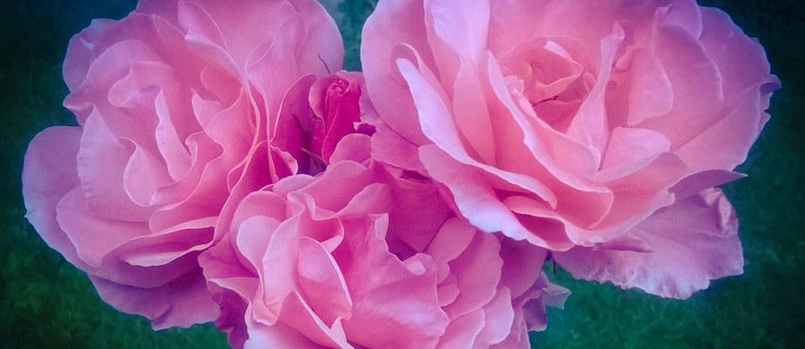 Wesela, urodziny, imieniny, jubileusze i inne wyjątkowe okazje wiążą się z wręczaniem i otrzymywaniem kwiatów i prezentów. Ci, którzy prezenty wręczają, często nie mają na nie pomysłu. Ci, którzy je otrzymują - miejsca w mieszkaniu, domu i biurze na kolejne obrazy, figurki, świece, albumy, ramki i inne tego typu gadżety. Czy można sobie nawzajem jakoś pomóc?