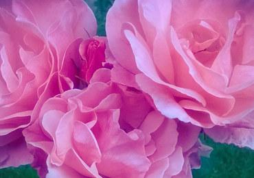 """Savoir-vivre: """"Zamiast kwiatów, prosimy o…"""""""