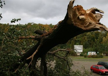 Kilkuset odbiorców w Małopolsce bez prądu. Wiatr uszkodził linie energetyczne