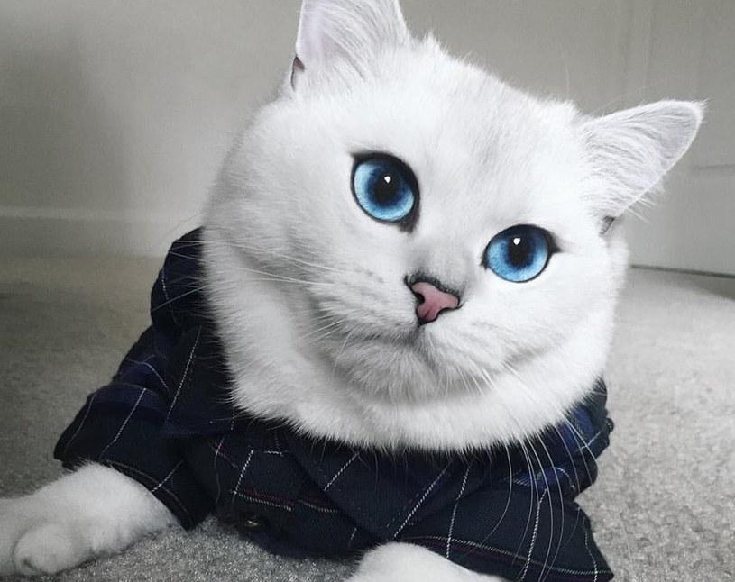 Ma na imię Coby i jest brytyjskim kotem krótkowłosym. Jego charakterystycznymi cechami są duże niebieskie oczy i jak pisze właściciel jeszcze większą osobowość. Sieć jakiś czas temu oszalała na jego punkcie.