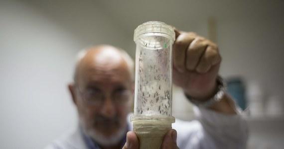 W Czechach zarejestrowano pierwsze dwa przypadki zakażenia wirusem Zika. Wirusa wykryto u mężczyzny i kobiety, którzy wrócili z Karaibów.