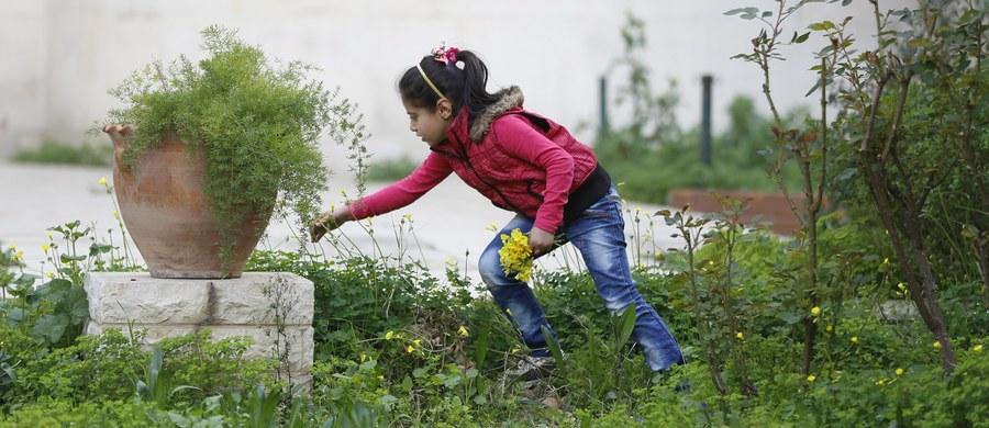 Około 250 tysięcy dzieci przebywających na oblężonych terenach w Syrii cierpi głód. Nie mają dostępu do leków i cierpią na problemy natury psychologicznej - podała organizacja Save the Children.